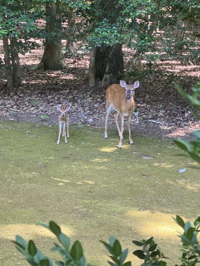 2020 deer